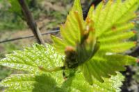 C'est le printemps en Terre des Brouilly et la nature reprend vie !