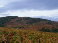 C'est l'automne et sa palette de couleurs superbes. Le domaine Paul Champier au pays de Brouilly vous invite à sa dégustation privée animée par l'oenologue du Domaine.