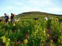 Le Domaine Paul Champier d'Odenas en direct des vignes sur TF1 pendant les vendanges 2015.