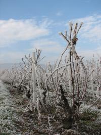 Au pays des Brouilly, les vignerons du Domaine Paul Champier vous souhaitent une bonne année !